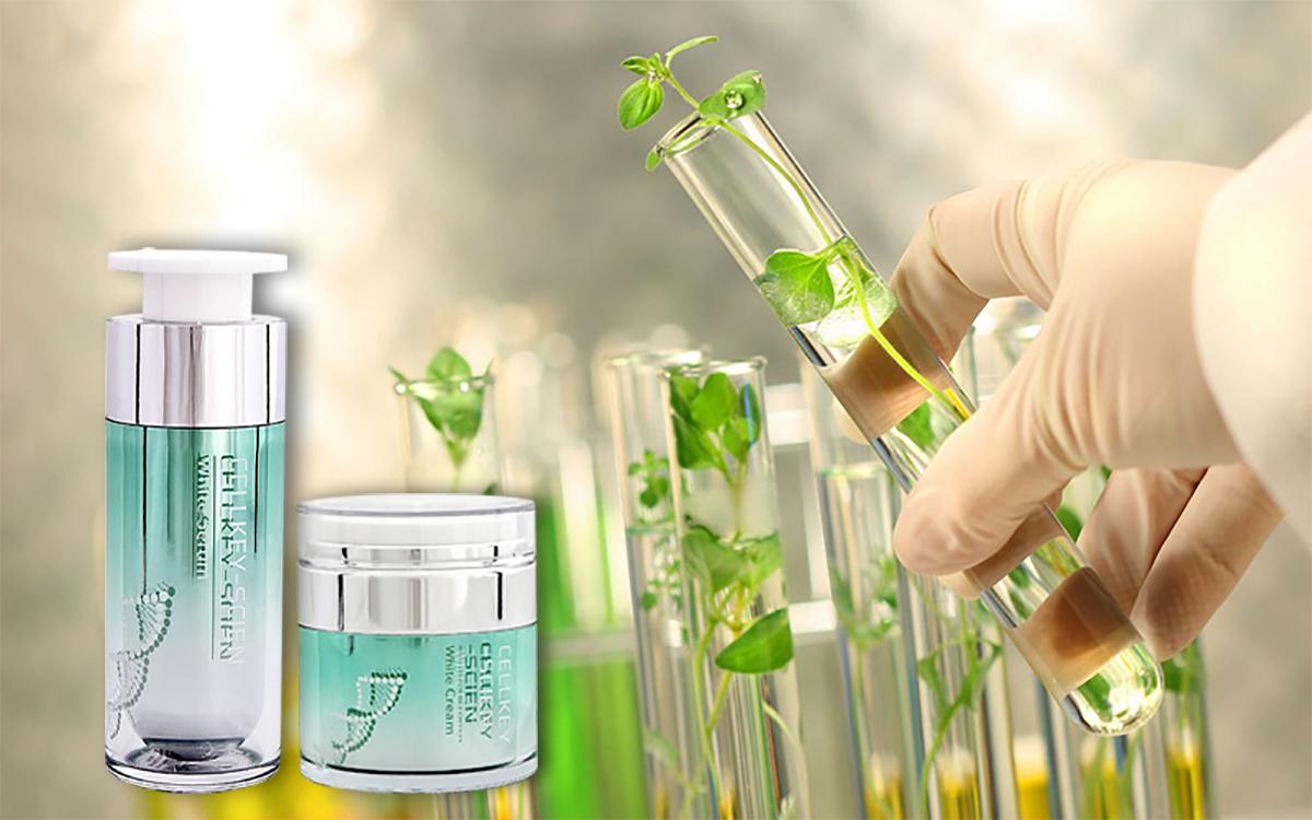 Tế bào gốc thực vật có dạng lỏng